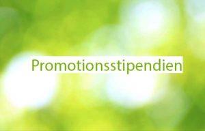 Promotionsstipendien der Medizinischen Fakultät Mannheim – Nächste Bewerbungsfrist: 15.07.